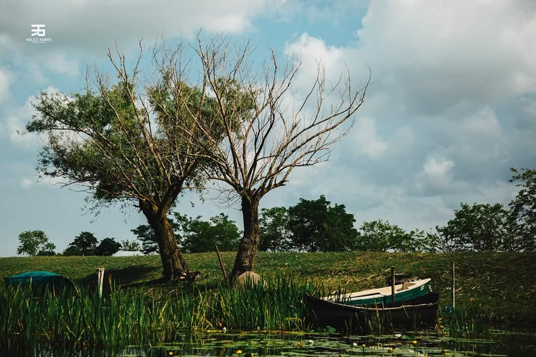 copaci-barca