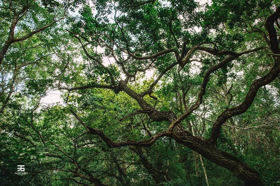 copaci-natura