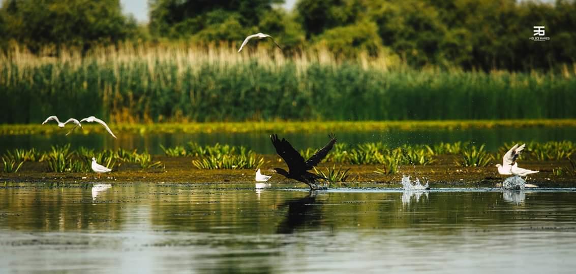 cormoran-si-pescarusi