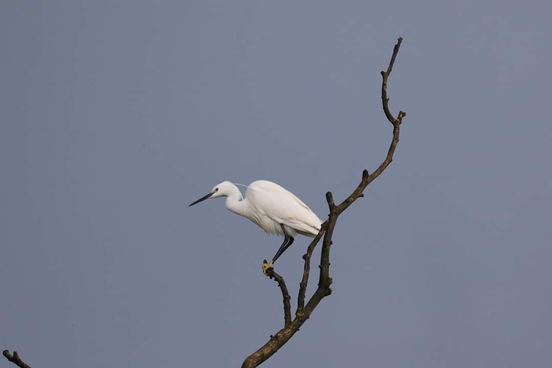egreta-copac