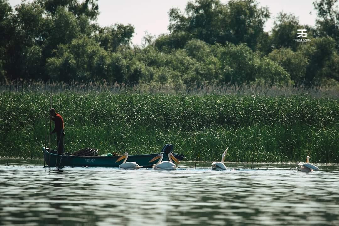 pelicani-si-pescari-barca