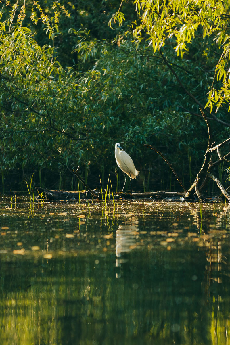 lacul-cu-cotete